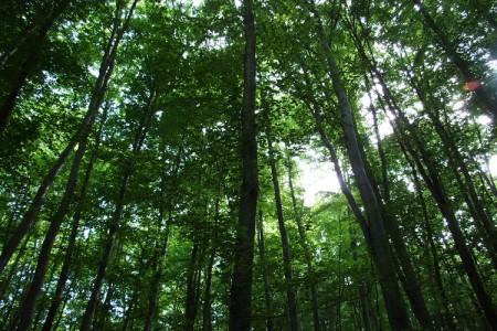 Europski novci za razvoj šuma