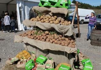 Krumpir naš svagdašnji