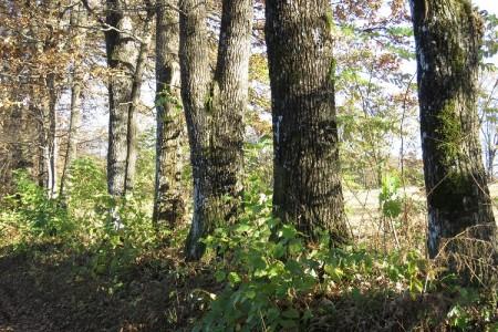 Od šume ne vidimo drvo