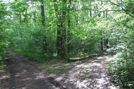 Ima li šumskih cesta na Velebitu previše ili premalo?