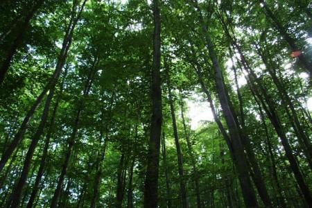 Velebitske šume svjetska baština UNESCO-a!!!