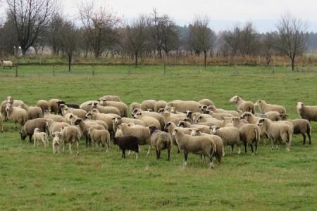 JAVNI POZIV  za iskazivanje interesa za zakup/prodaju poljoprivrednog zemljišta u vlasništvu Republike Hrvatske
