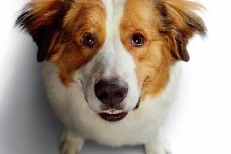 """Ovaj tjedan u kinu Korzo gledajte film """"Putovanje jednog psa""""!"""
