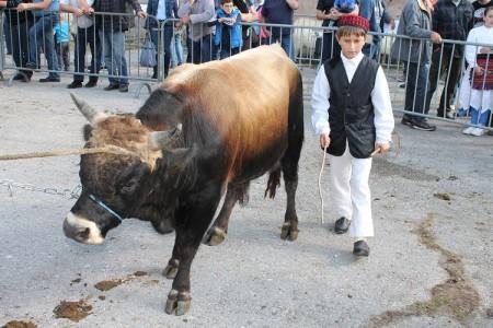 Večeras o stočarstvu u Lici i Dalmaciji