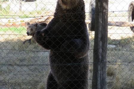 """Prijatelji životinja zabrinuti za """"Macoline"""" medvjede"""