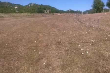 Gospićkim poljoprivrednicima 900,000 kuna za štete od suše!!!