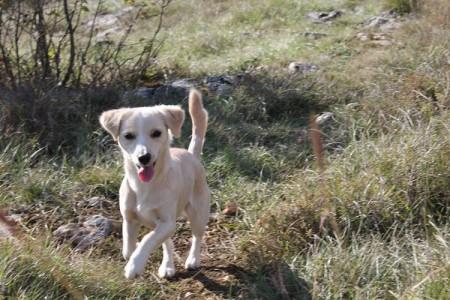U tijeku akcija obveznog cijepljenja protiv bjesnoće pasa