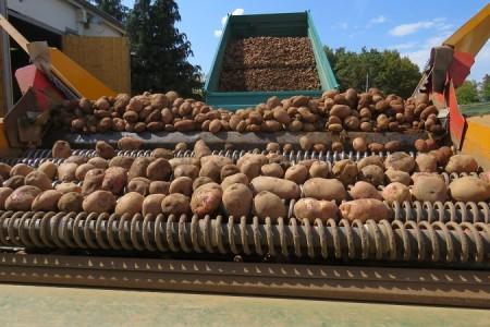 Odličan urod Ličkog krumpira na površinama AgroVelebita iz Lovinca!!!