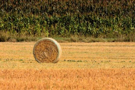 VAŽNO: u Gospiću  raspisan Javni natječaj za zakup poljoprivrednog zemljišta