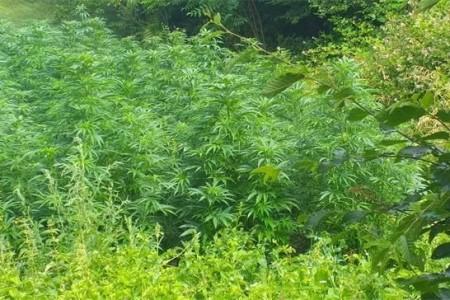 Dva Kosinjana osumnjičena za uzgajanje marihuane