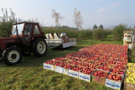 Rast vrijednosti poljoprivredne proizvodnje na gotovo 19 mlrd kuna