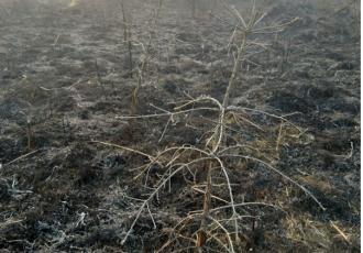 """Šumari apeliraju """"izbjegnite štetne posljedice koje nastaju neopreznim paljenjem vatre""""!"""